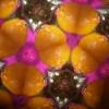 Cosmic Mandalas 8