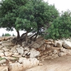 pictures israel (6)